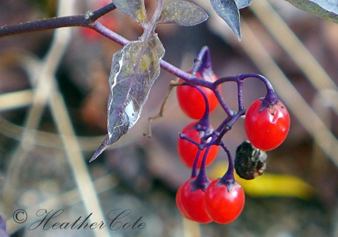 berries.2014