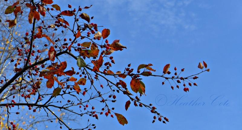 trees.2.2014