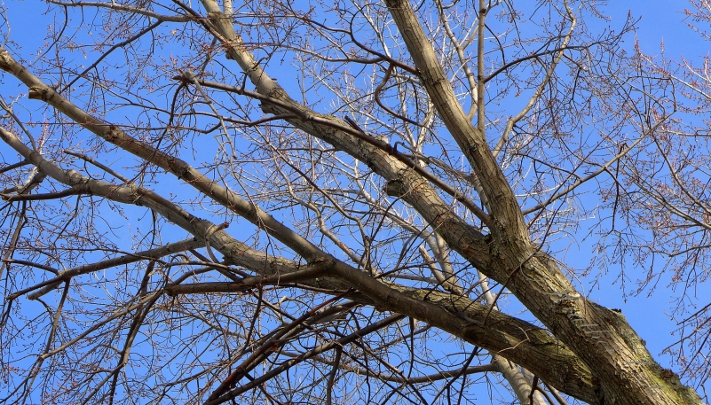 trees.2014