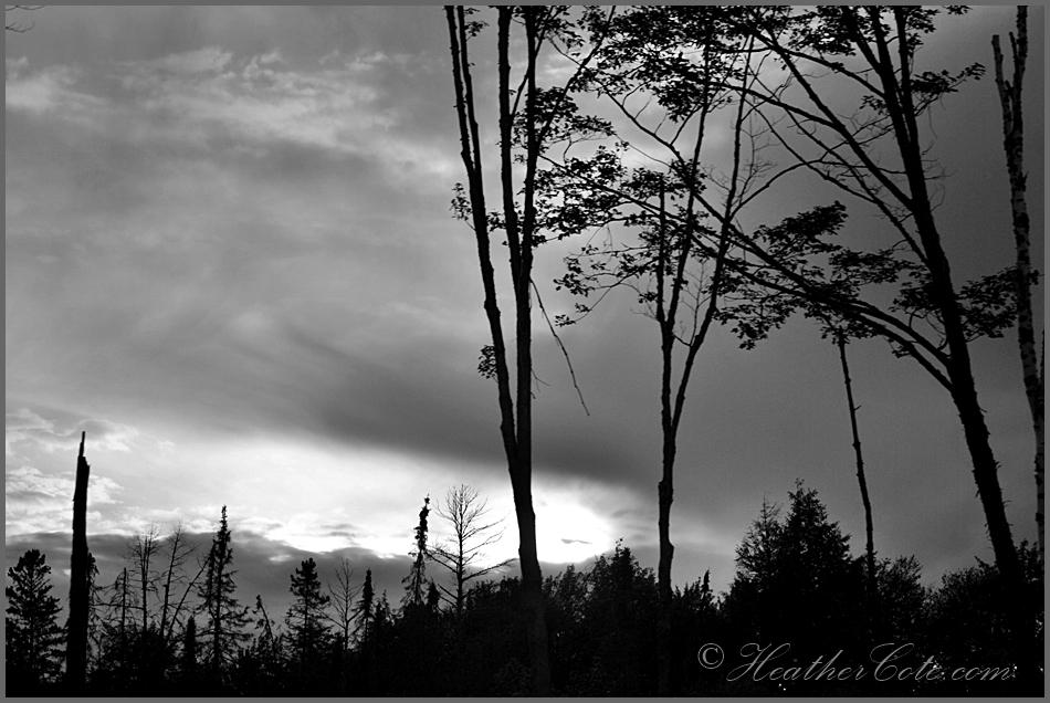 trees.sky.2.2013 (2)...