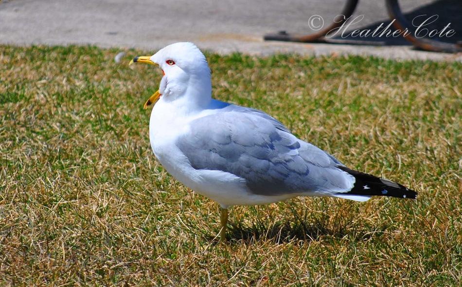 bird....