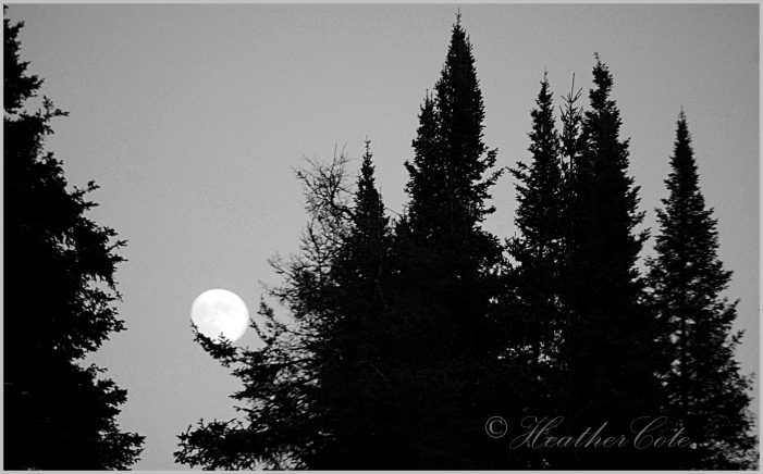 ..holding.moon.2013