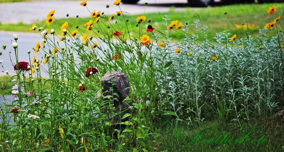 wildflowers.d103 (2)