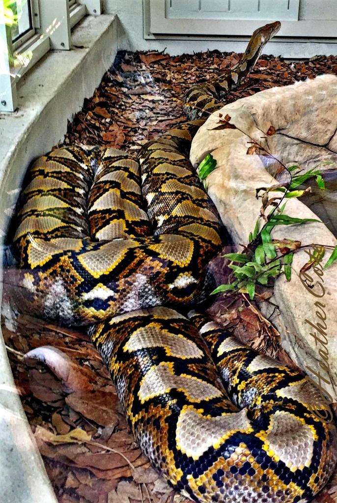 .snake.zoo.16