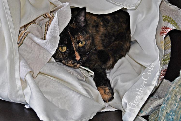 kitty.2.16